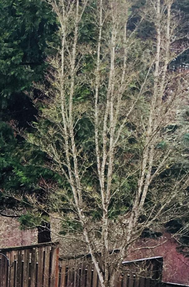 Dead looking tree